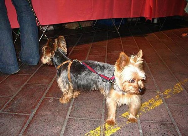 two headed dog illusion
